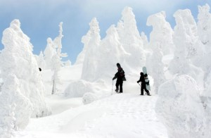 Yamagata Zao Snow Monsters