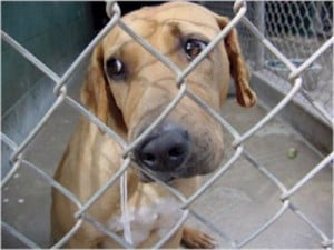 abused-dog--large-msg-126297968875